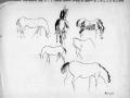 NZ Horse Studies